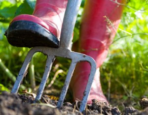 preparing-organic-soil-lg