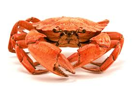 Crab is in season this month Packed with protein and Omega 3 which helps brain power & protects against heart condition